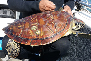 Turtle Rescue Tours